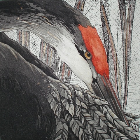 Close up of watercolor of heron in blacks, grays and whites with an orange crest