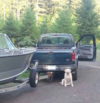 Picture of Labrador waiting next to a truck and a boat.
