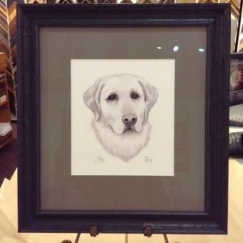 Drawing of yellow Labrador