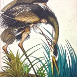 Illustration of heron at the edge of a river