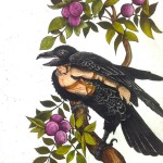 Illustration of raven in a plum tree