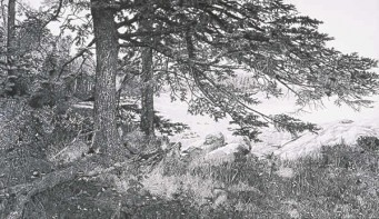 Black and white drawing of treas on rocky soil