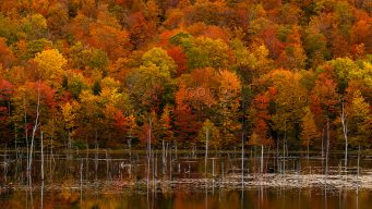 A stand of trees with autumn leaves behind a body of water.