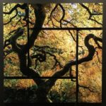 Silhouette of a gnarled tree outside a window, you can see bright autumn leaves in the background