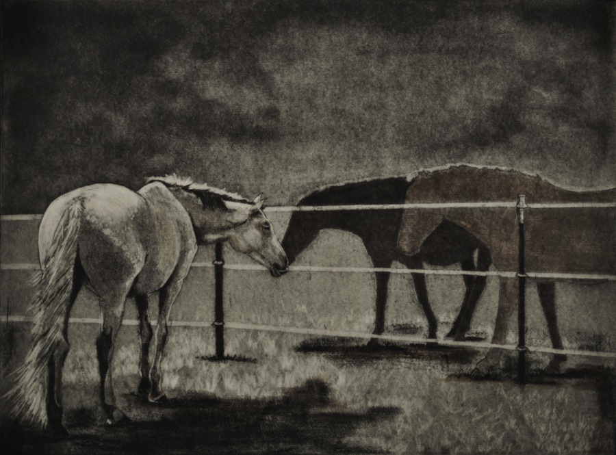 Black and white image, there is a white horse on the near side of a barbed wire fence, there are two darker horses on the other side of the fence. The horses are nuzzling each other in greeting.